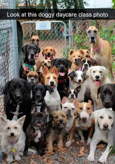 Funny Snapchats Dog Photo – 190 Pics #dogsfunnysnapchat