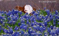 Chappell Hill Texas ~ Connie Garcia