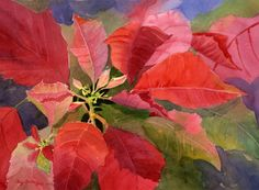 Poinsettia Blush by Cecy Turner