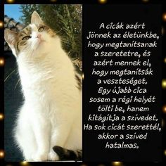 Cat Quotes, Buddhism, Animals And Pets, Einstein, Quotations, Verses, Thoughts, Motivation, Funny