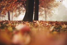 tree autumn bokeh