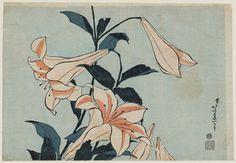 "malinconie: "" Flowers by Katsushika Hokusai """
