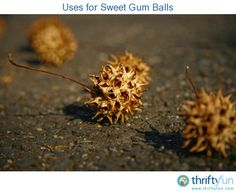 This is a guide about uses for sweet gum balls. Those spiny balls, seed pods, dropped by your sweet gum tree can actually be put to good use.