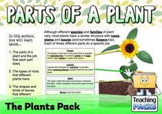 Discover the wonderful world of plants with our fantastic collection of teaching, activity and classroom display resources. Includes a child-friendly guide to plant growth, pollination, photosynthesis, classification, adaptation and much more! Science Curriculum, Science Resources, Activities, Parts Of A Plant, Child Friendly, Plant Growth, Classroom Displays, Photosynthesis, Wonders Of The World
