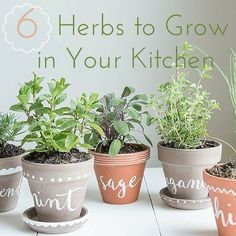 6 Herbs to Grow In Your Own Kitchen Garden | Kimberly Elise Natural Living