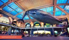 """O Museu de História Natural de Nova York é um dos mais visitados e importantes museus do mundo!  Serviu de cenário para o filme """"Uma Noite No Museu"""". Possui mais de 32 milhões de espécies de fósseis incluindo vários dinossauros que são a atração mais procurada pelos visitantes assim como o museu irmão que fica em Londres e recebe o mesmo nome. #londres #viagem #nyc #novayork"""