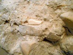 Resto de hueso en opus caementicium,Cripta de las calles Cascalerias.