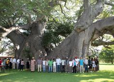 Sunland Baobab - África do Sul