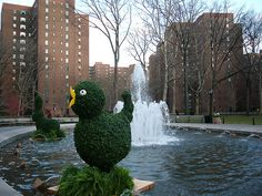 Stuyvesant Town Oval's Fountain Topiary - Duck by Marianne O'Leary, via Flickr