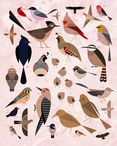 A good illustration for an applique quilt or embroidery.looks like a Charley Harper illustration. Art And Illustration, Vogel Illustration, Animal Illustrations, Pattern Illustration, Charley Harper, Bird Poster, Desert Art, Grafik Design, Bird Art