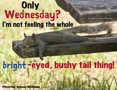 """If you read these """"Top 26 Work Memes Wednesday"""" then you can't control on your laugh. Now just read out these """"Top 26 Work Memes Wednesday"""" and keep sharing with your friends. Happy Wednesday Images, Wednesday Hump Day, Wednesday Memes, Good Morning Wednesday, Good Morning My Friend, Tuesday Humor, Good Morning Good Night, Wednesday Sayings, Wednesday Greetings"""