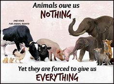 One Voice for Animal Rights