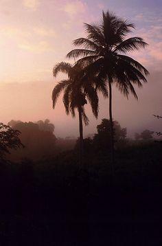 Tropical Dawn, Dominican Republic