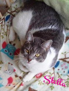 Stella, my beautiful cat <3