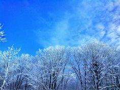 Snow. Trees. Maine. www. portlandmagazine.com Maine Winter, Snow Trees, Clouds, Outdoor, Outdoors, Outdoor Living, Garden, Cloud
