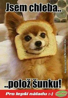 Som chlieb, polož šunku! :)))
