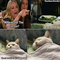 Quarantine Memes That Will Make You Laugh Throughout Quarantine Funny Cat Videos, Funny Cats, Mekka, Cute Animal Memes, Happy Cartoon, Great Memes, Friends Laughing, Kitten Meowing, Kittens