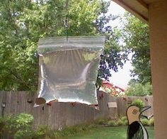 How to keep pesky flies away. Picture of What you will need HNI_0014.JPG What you will need: A clear plastic sandwich bag (you can get these at wal-mart or any other grocery store). 2 1/2 cups of water. A bottle of lime juice. 2 teaspoons of salt. Two or three paper clips And some shiny pennies.