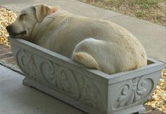 Proof Dogs Can Sleep Pretty Much Anywhere – 37 Pics