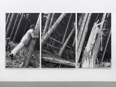Anna & Bernhard Blume, 'Kontakt mit Bäumen', 1987 Anna, It Works, Artist, Flowers, Artists, Nailed It
