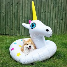 "marcel-lecorgi: "" Unicorns are awesome, I am awesome, therefore I am a unicorn. Who's yours?  Les licornes sont géniales, je suis génial, donc je suis une licorne. Qui est la votre? #LeUnicorg """