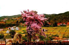 Hermosura arbórea