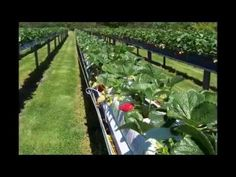 Farming and Gardening Plus Miscellaneous. This is a variety playlist, but it includes several good videos about gardening and farming. To see the whole playlist click here> https://www.youtube.com/playlist?list=PL8ACA48EEB0A4E37D