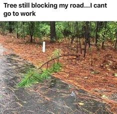 Daily funny pictures with captions for you. Check these top 52 funny photos that will make you laugh out loud. Funny Pictures With Captions, Picture Captions, Funny Images, Funny Photos, Funny Car Memes, Car Humor, Hilarious, Funny Cars, Humor Humour
