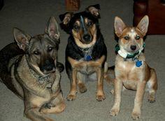 Gracie, Lucy & buddy Trout / Photo by Tom Bowlin