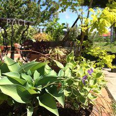 おはようございます 嵐が去って?きらっきらの朝です♪  雨に濡れた庭と青空  なんて気持ちがいい朝...