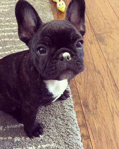 Puppachino on my nose!