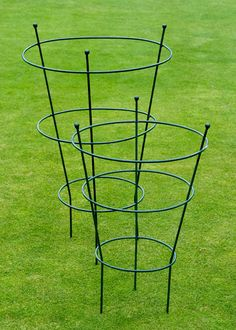 Buy Peony plant supports - Help your peonies stand tall with room to grow: Delivery by Crocus Buy Peonies, Peonies Garden, White Peonies, Garden Trellis, Garden Plants, Peony Support, Growing Peonies, Plant Supports, Metal Garden Art