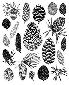 Pinecones is a print taken directly from one of the pages of my book, Twenty Ways To Draw A Tree. This print is a limited edition of 100. Other
