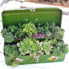 Pick up an old tackle box at the flea market and fill it with succulents! Nice gift for that male gardener.