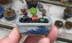 bonsai garden pot with tiny pots inside. Succulent Arrangements, Cacti And Succulents, Planting Succulents, Planting Flowers, Bonsai Plants, Bonsai Garden, Moss Garden, Garden Pots, Mame Bonsai