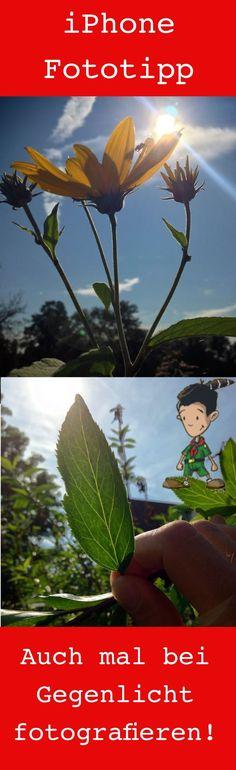 16 tolle Tipps für bessere Fotos mit dem iPhone. Unser Tipp hier: Probiert es mal mit Gegenlichtaufnahmen. Besonders Pflanzen zeigen Euch so viel mehr im Gegenlicht - die Struktur von Blättern und Blüten zum Beispiel.