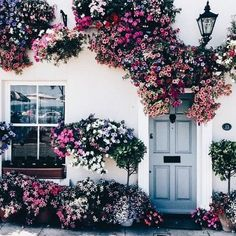 These flowers are incredible! They've grown so big they have such a soft, flowing look to them and they create the most warm and inviting entry.