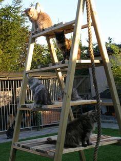 1000 Images About Cat Houses Poles Etc On Pinterest