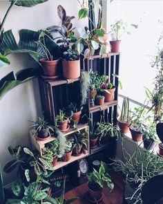 "1,596 Likes, 5 Comments - Urban Jungle Bloggers™ (@urbanjungleblog) on Instagram: ""TGIF! What are your plans today? Watering day? 🤗🌿💦 📷 by @jungleinaroom #urbanjunglebloggers"""