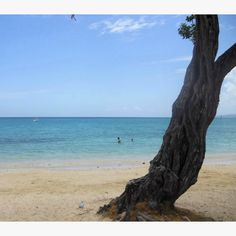 Ocho Rios Jamaica, cruised to Jamaica, nice but the people follow you because they need money