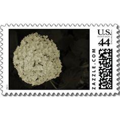 $18.95 http://www.zazzle.com/sepia_tone_hydrangea_flower_blossom_postage_stamps-172591260444198067?rf=238222133794334761