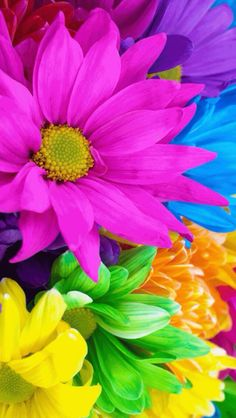 Pretty Flowers for Spring My Flower, Colorful Flowers, Beautiful Flowers, Neon Flowers, Rainbow Flowers, Happy Flowers, World Of Color, Color Of Life, Chroma Key