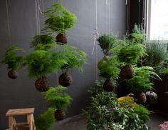Dutch artist Fedor Van der Valk's string gardens, featuring plants in bloom from throughout the year.