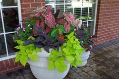 More Caladium and Begonias in the next one. This time Impatiens and the Purple hearts are the fillers. The green sweet potato wine is the spiller.