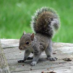 Baby squirrel <3