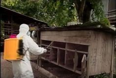 Eight million chickens and turkeys have been destroyed at 70 farms in 13 states due to the spreading H5N2 bird flu virus. Health officials are cautiously optimistic the virus will not affect humans, but are offering antiviral drugs to farm workers.