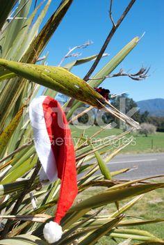 New Zealand has it's own iconic Kiwiana Christmas theme. Agriculture Photos, Kiwiana, Turquoise Water, Christmas Background, Image Now, Christmas Themes, New Zealand, Royalty Free Stock Photos, Photography