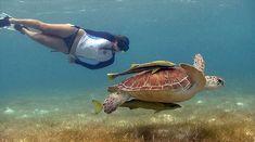 snorkel - Buscar con Google