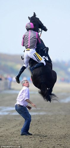 Horse rears up as jockey tries to mount it during only beach meet in British Isles Wow, did he succeed?