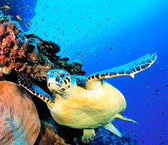Family Vacations: Top 10 Family Travel Destinations - Page 10 of 10 - Femenista Grand Cayman, Family Travel, Family Vacations, Animals Of The World, Ocean Life, Under The Sea, Dog Pictures, Wonders Of The World, Travel Photos